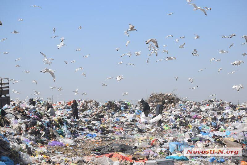 На мусорном полигоне нашли останки трупа