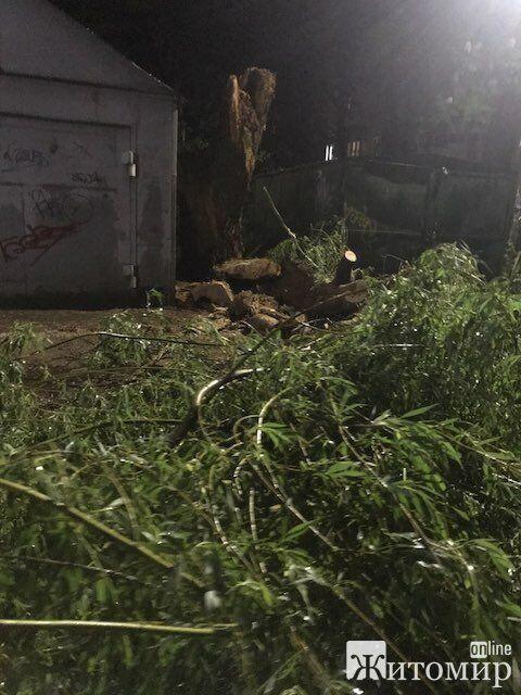 Наслідки урагану в Житомирі