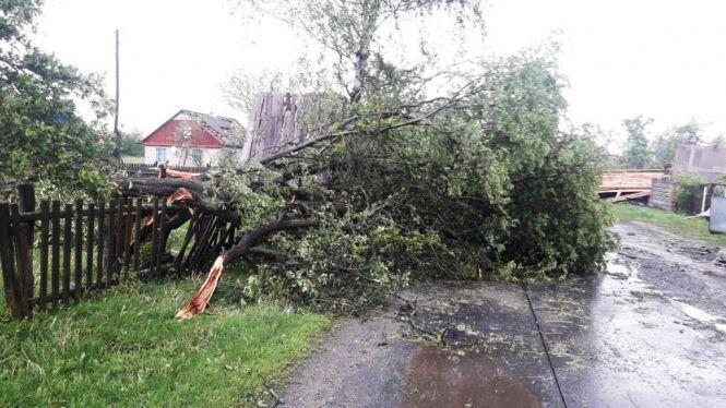 Ураган в Житомирській області