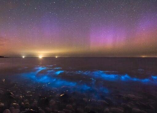 В Уельсі фотографи сфотографували рідкісний планктон, який світиться. І це приголомшливо!