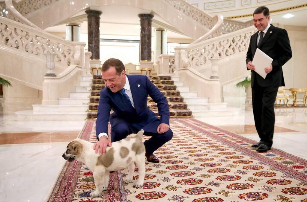 Медведеву подарили алабая