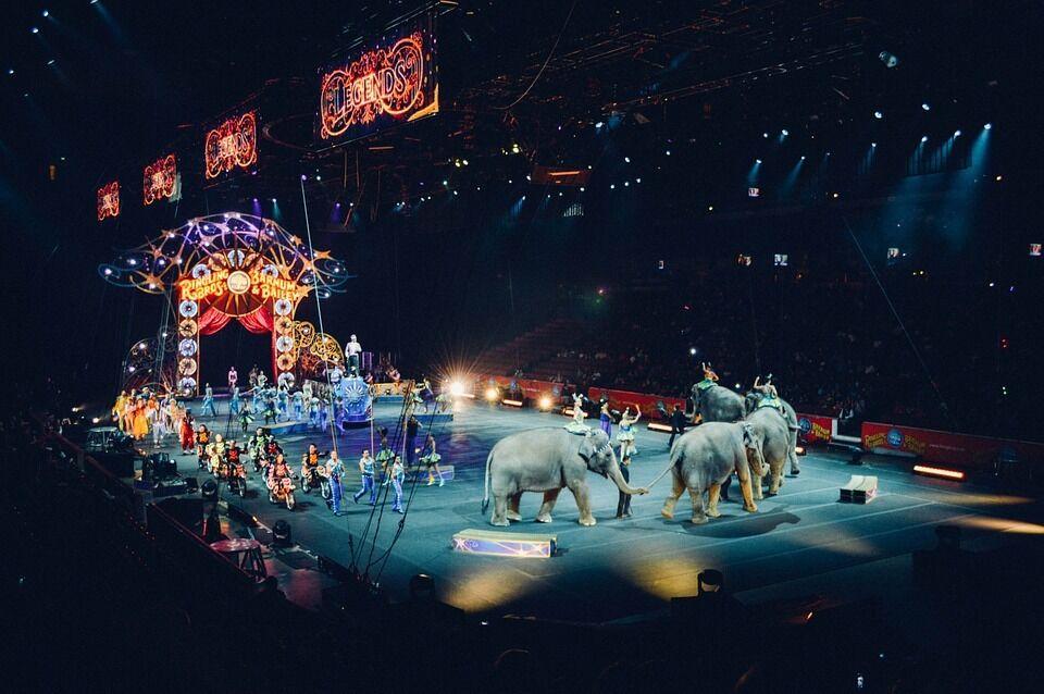 Цирки с животными запретили еще в одном городе