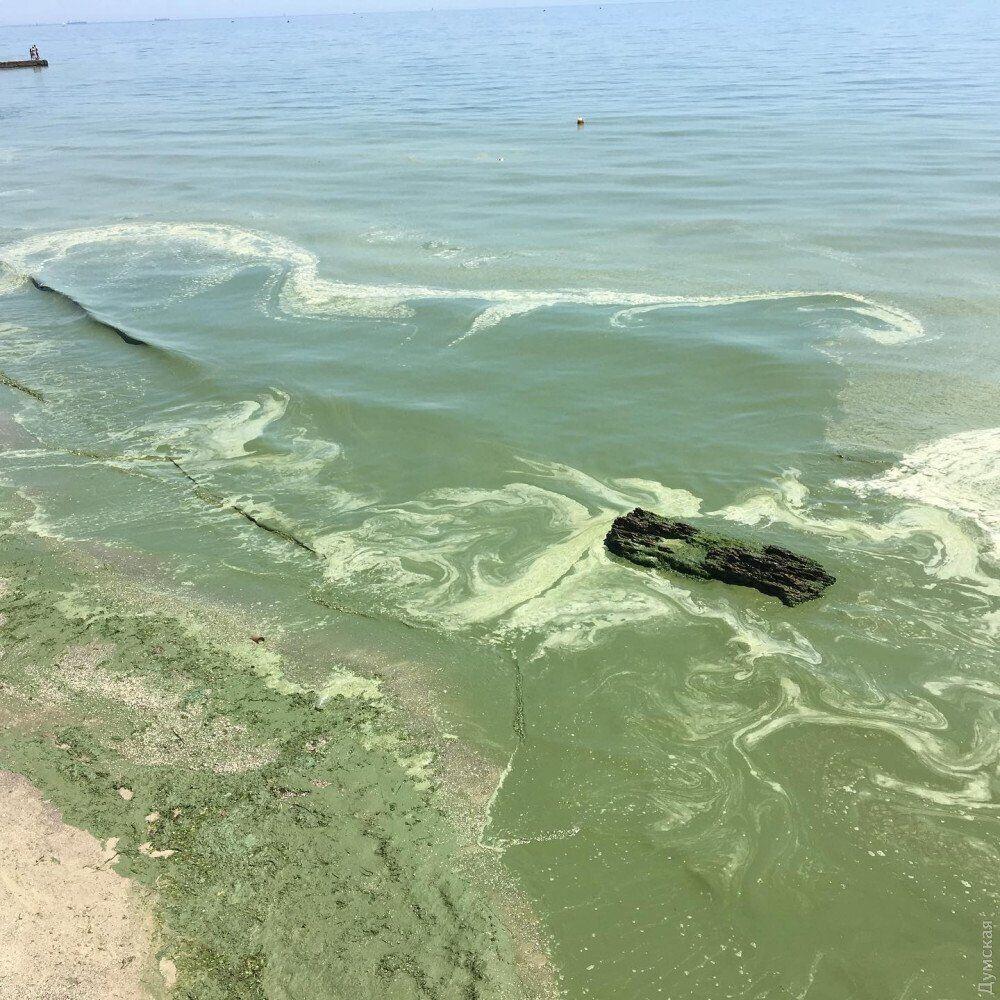 Море в Одессе позеленело