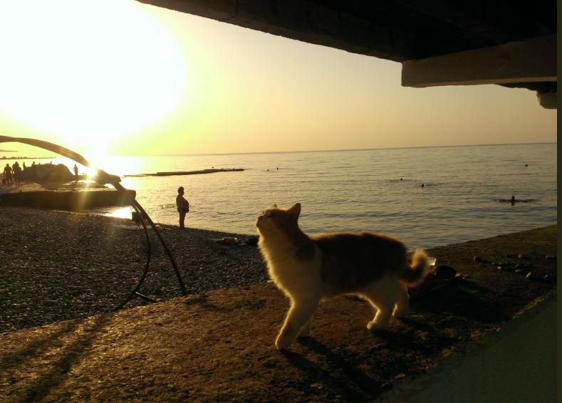 """""""Котів більше, ніж туристів!"""" Опубліковані світлини пляжів Криму (фото)"""
