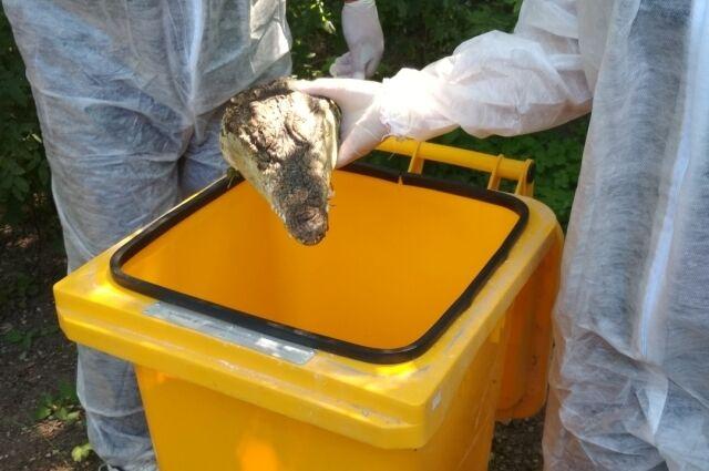 В Крыму нашли отрубленные головы крокодилов