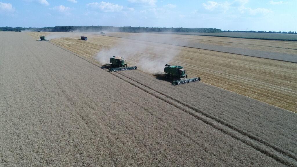 """В """"Укрлендфарминге"""" спрогнозировали высокий урожай озимых"""