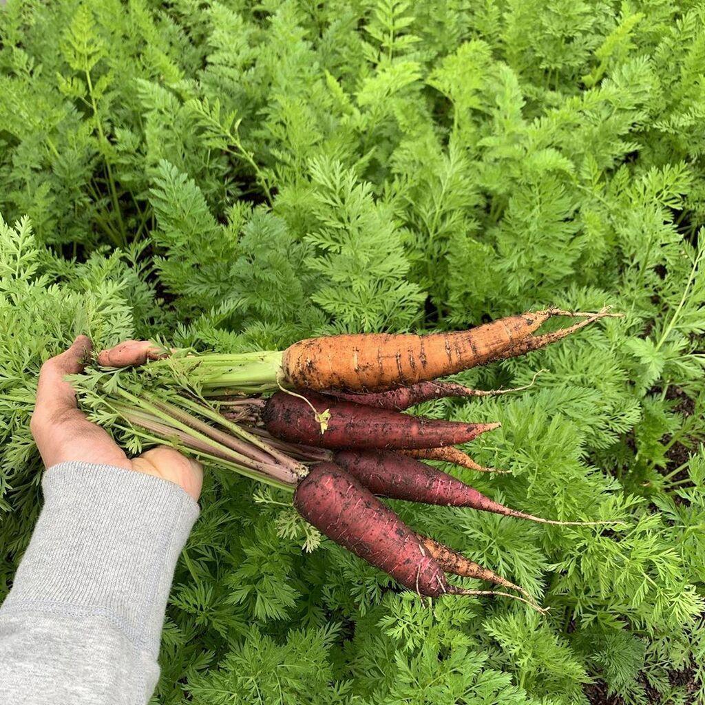 Це вражає: відомий діджей похвалився їжею, яку сам вирощує