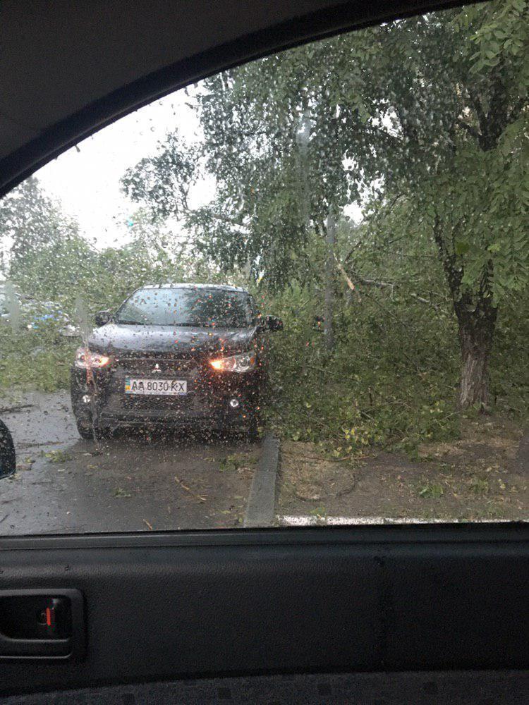 Дерево упало на авто