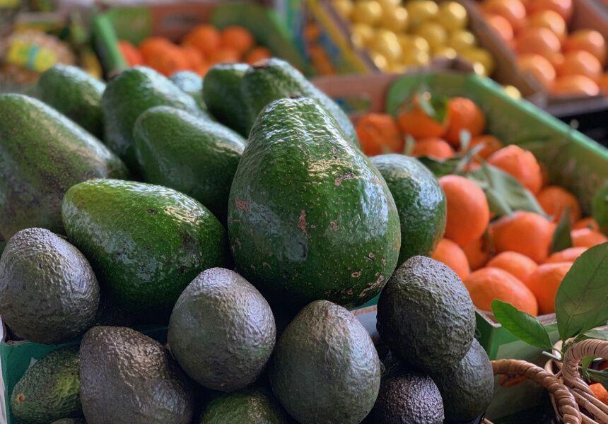В Австралії почали вирощувати гігантський авокадо