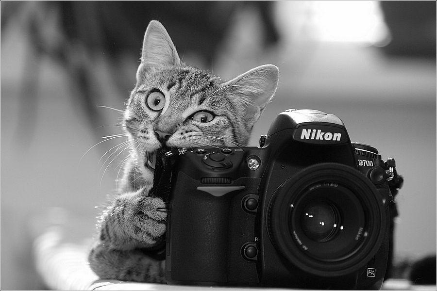 открытки с камерой того