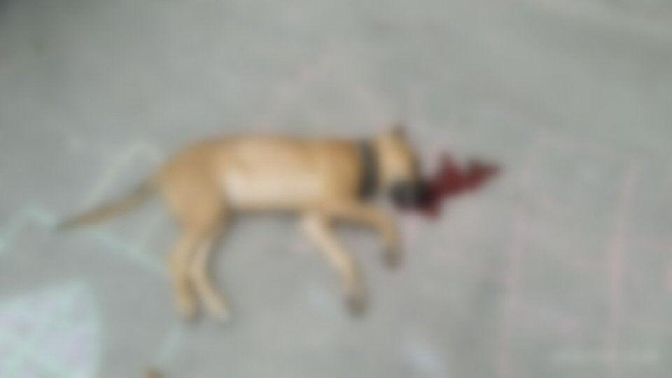 Выкинул с четвертого этажа: в Днепре мужчина зверски убил собаку. Фото 18+