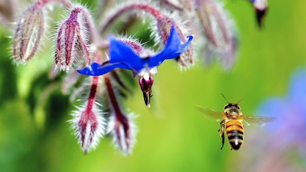 Пчела летит к цветку, иллюстрация