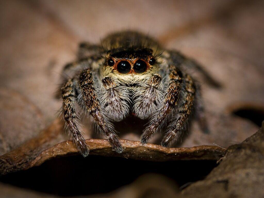 У Запоріжжі помітили небезпечного павука