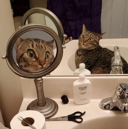 Кумедне фото кота в дзеркалі