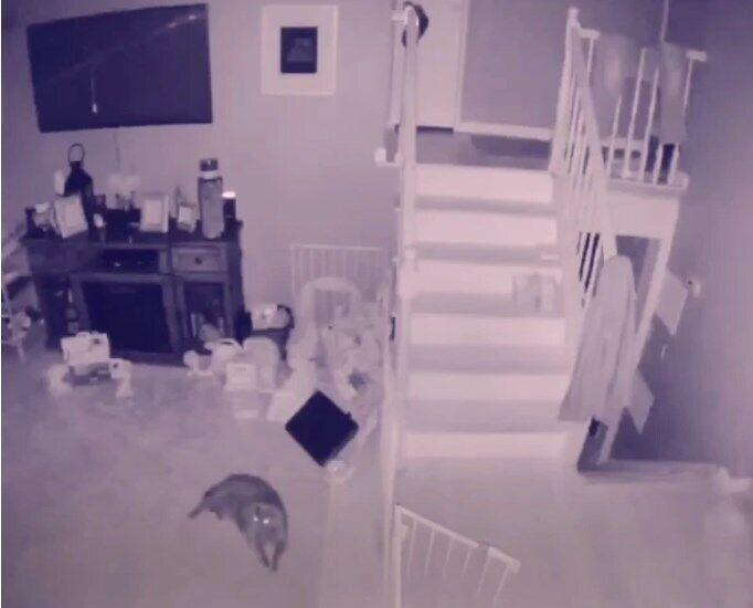 Призрак ребенка? В сети опубликовали видео загадочного явления