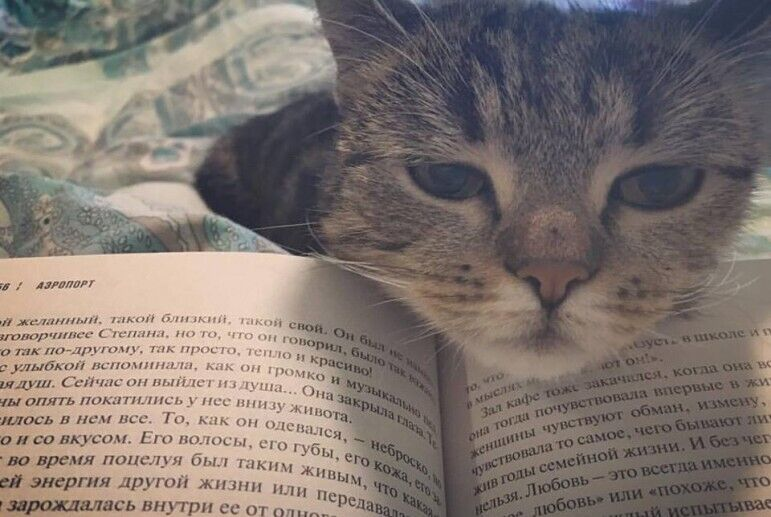 Кошка Анастасии Красносельской