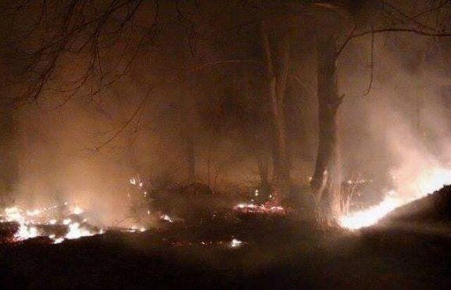 На Закарпатті потужна пожежа підібралася до лісу