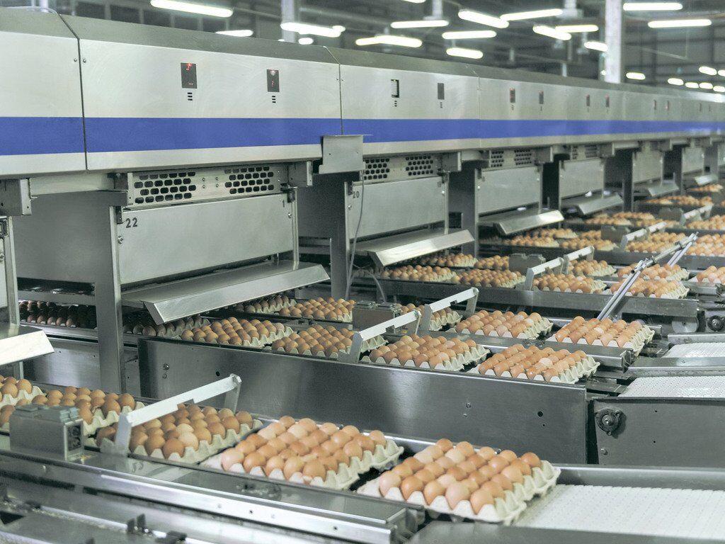"""""""Авангард"""" увеличил производство и экспорт яиц"""