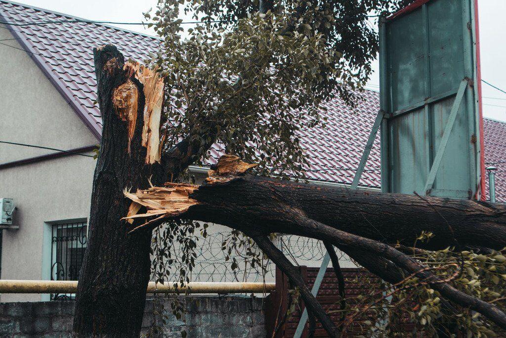 Дерево не витримало вітру