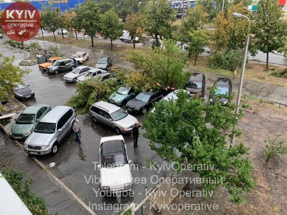 Деревья вырвало с корнем: фото последствий урагана в Киеве photo