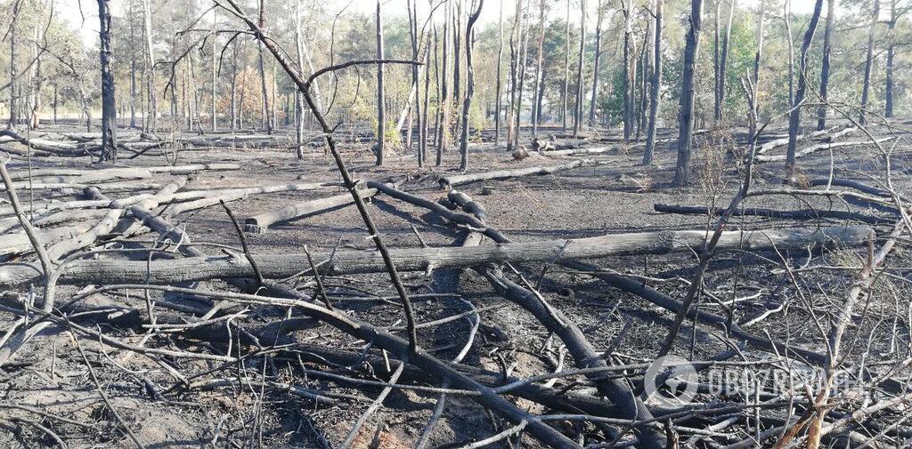 На месте ЧП остались только поваленные и обгоревшие деревья, трава