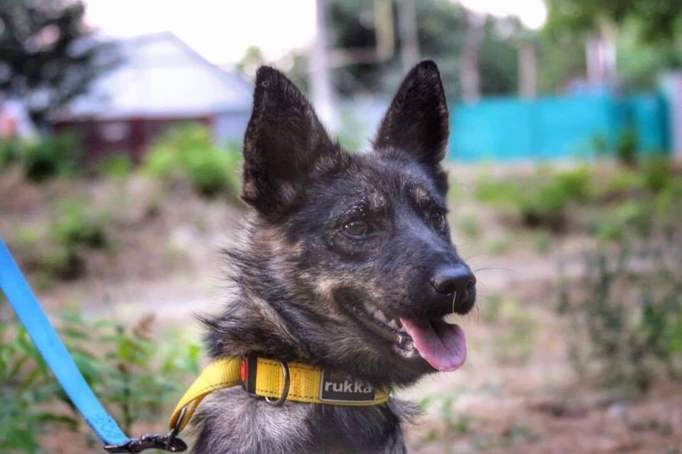 Собака Джесі
