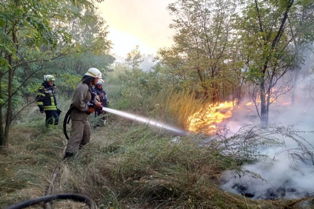 У Петриківському районі спалахнула масштабна лісова пожежа