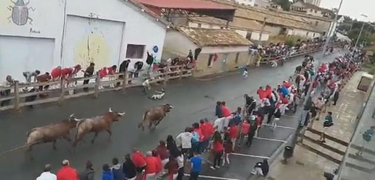 В Іспанії бик проткнув рогами чоловіка
