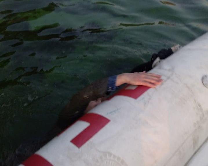 Жінка впала в річку