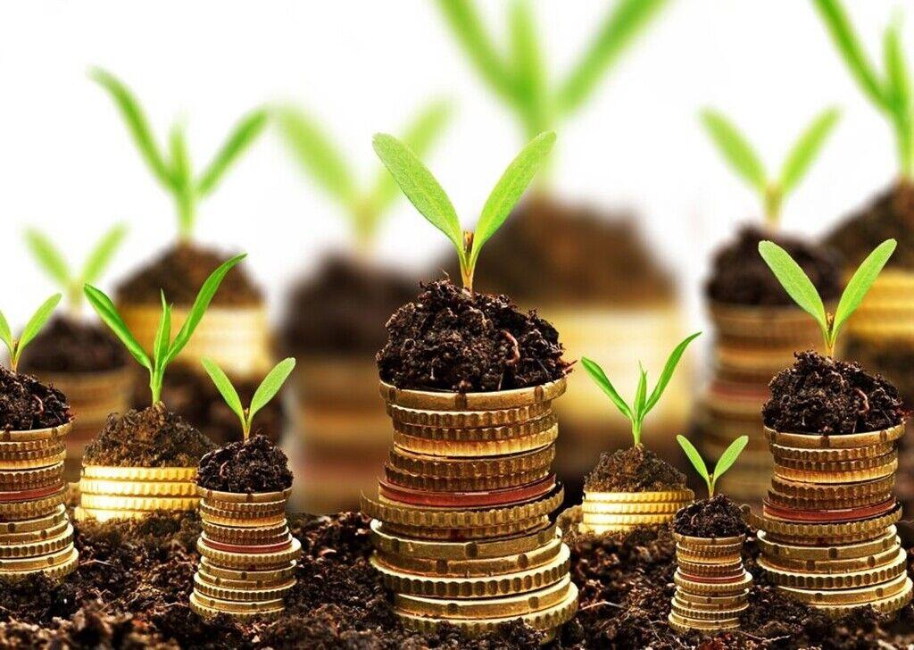 Запуск рынка земли в Украине: названы два сценария