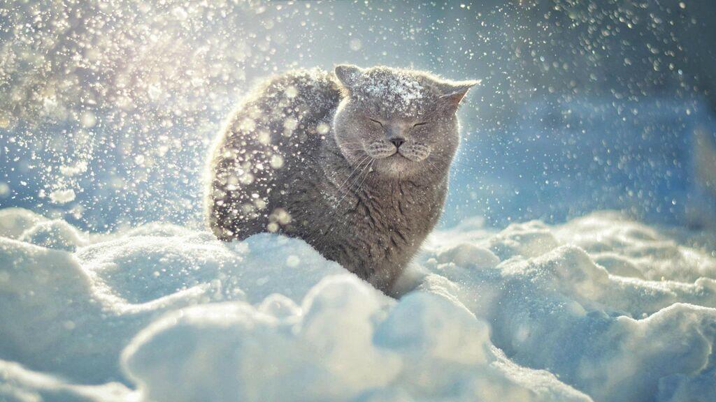 """Приход """"настоящей"""" зимы в Украине прогнозируют в середине декабря"""