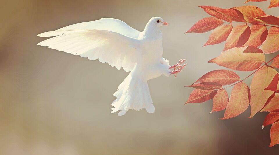 День мира (иллюстрация)