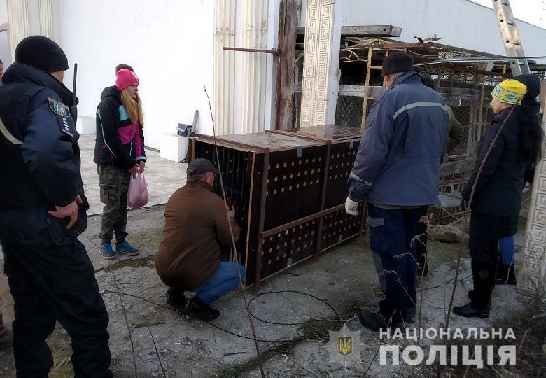 Животные будут жить в учреждениях Киевской и Харьковской областей