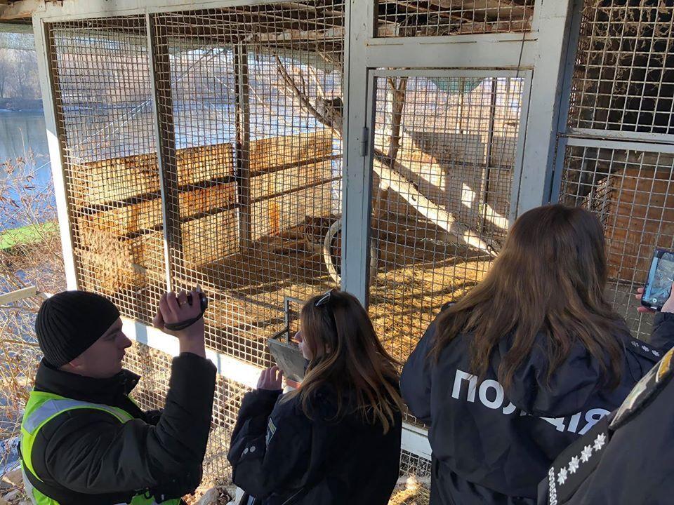 В заброшенном клубе Tiger Club на острове Жуков, что в Киеве, нашли шестерых тигров