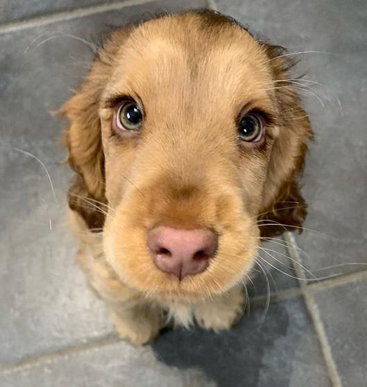 Собака с глазами персонажа Диснея сразила сеть