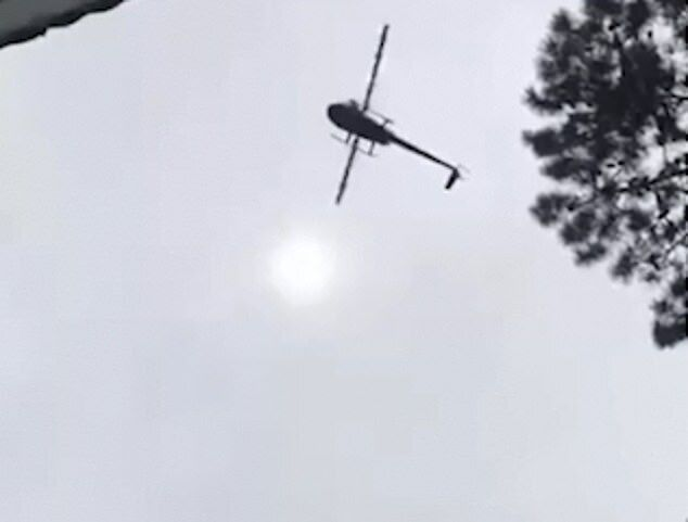У басейн з вертольота скинули свиню