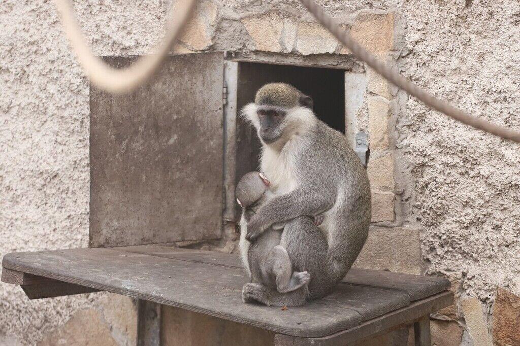 Після реконструкції зоопарку вхід буде в Преображенському парку