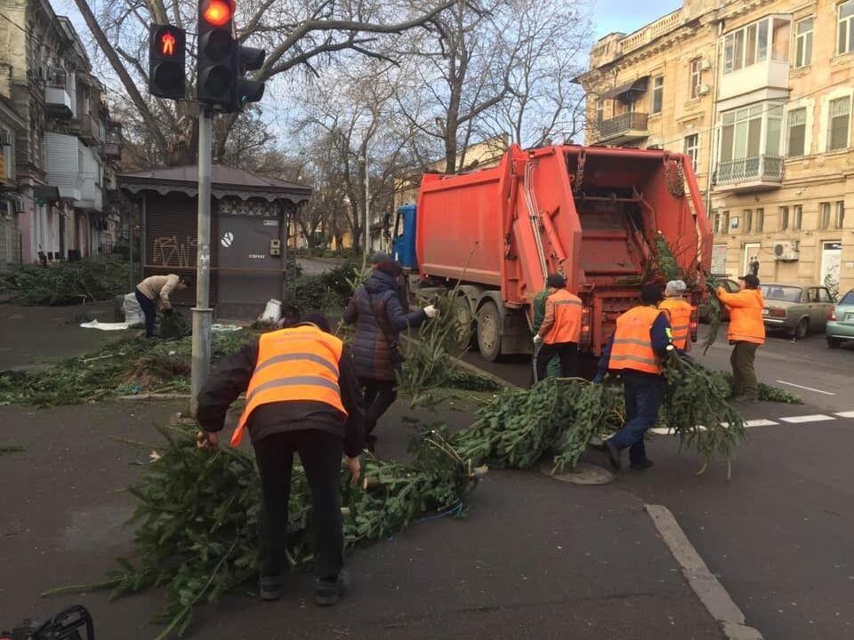 """В Одессе составили """"черный список"""" торговцев елками, бросивших на улицах нераспроданные деревья"""