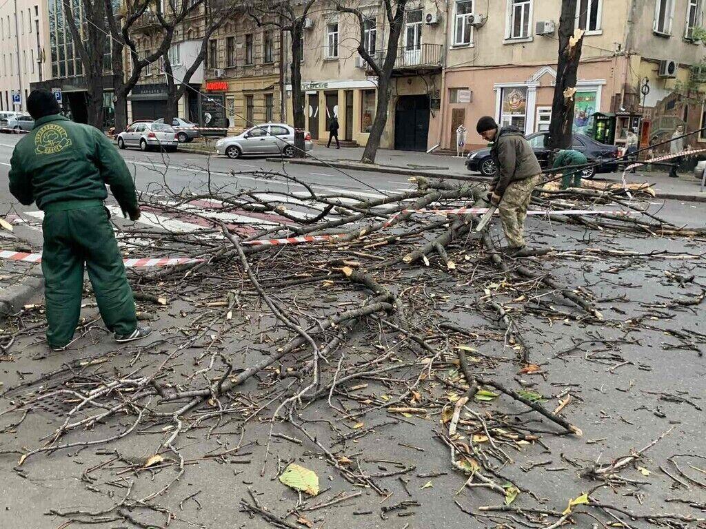 В Одессе штормовой ветер повалил деревья