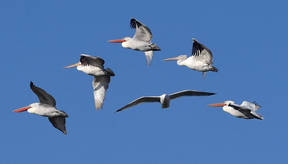 Из-за теплой погоды птицы Одесщины не улетели на зимовку