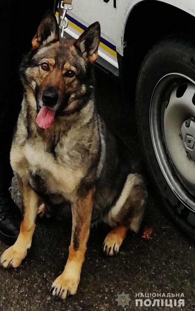 Полицейский пес Альма