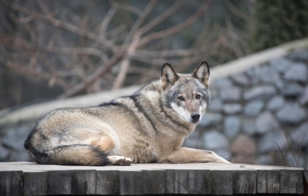 Кличко нагадав про реконструкцію київського зоопарку