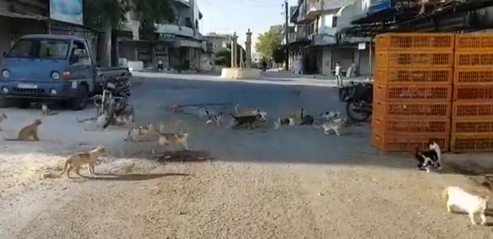 Кафранбель: у Сирії показали місто після атак Асада і Путіна