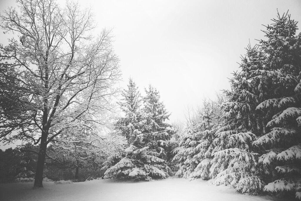 Приметы и праздники 28 января: что нельзя делать в Павлов день