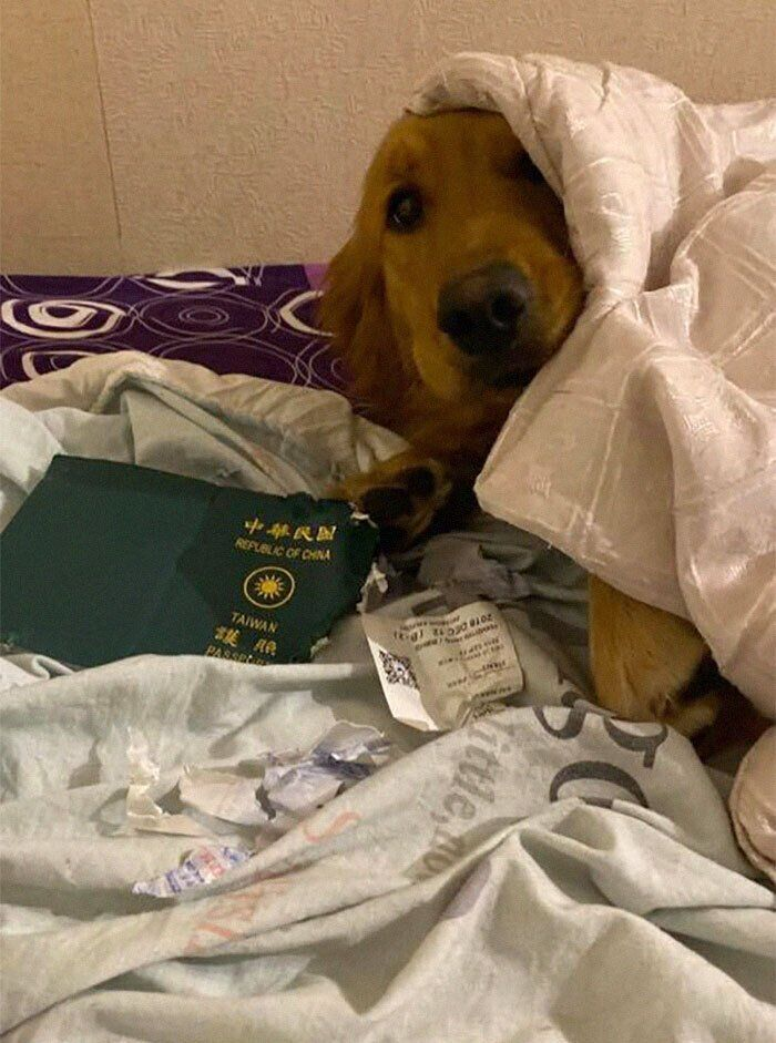 Собака спасла жительницу Тайваня от поездки в Китай