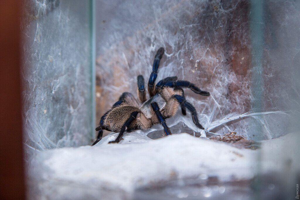 фото паука в зауралье приземлённый