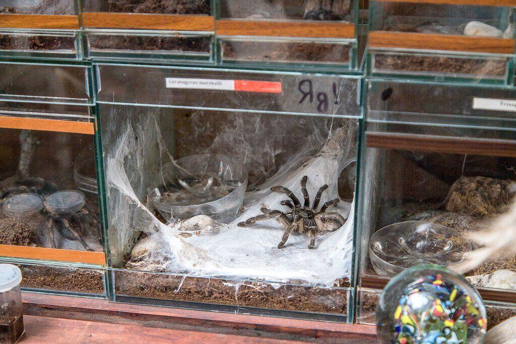 """Нові фото з квартири одеського """"людини-павука"""""""