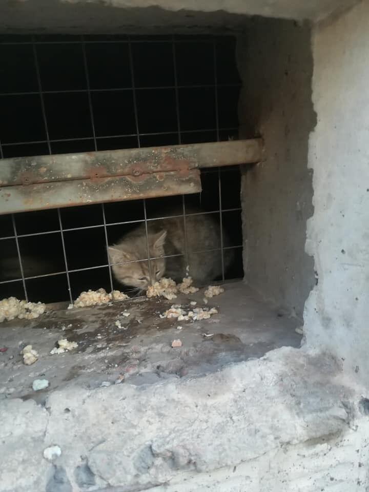 В Кривом Роге в школьном подвале замуровали котов