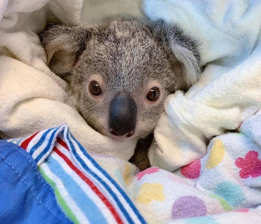 Животные и пожары в Австралии
