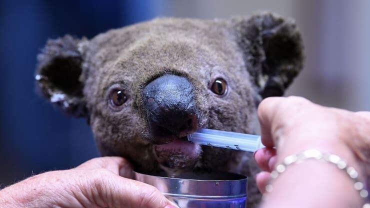 Тварини і пожежі в Австралії
